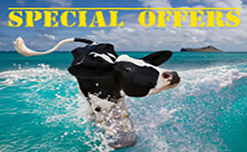 Special Offers Fuerteventura